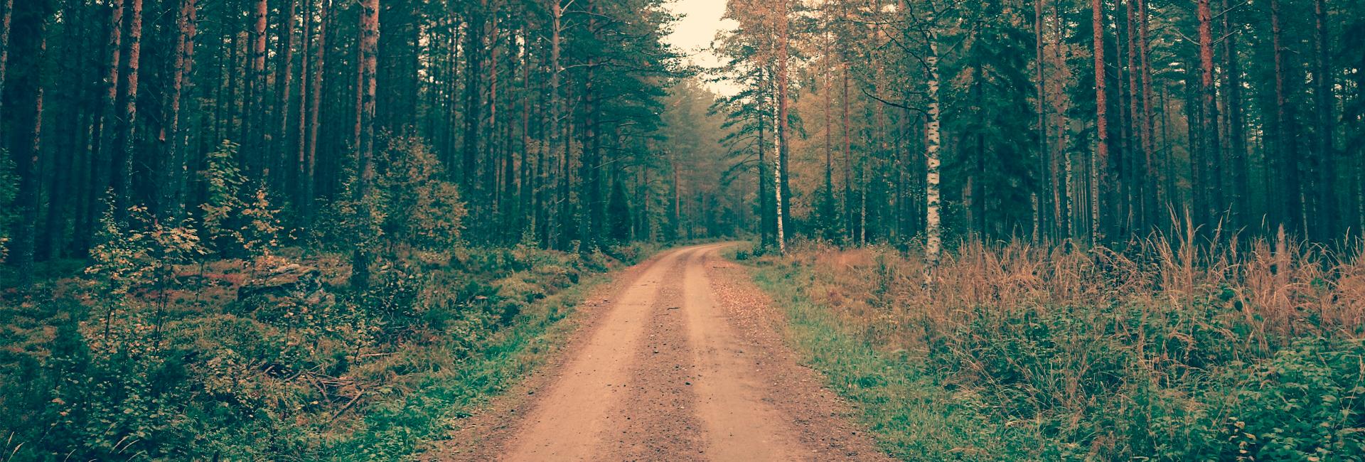 Soratie rauhallisen metsän keskellä